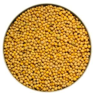 Yellow_Mustard_Seed